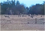 This is an early morning view from inside one of the ground blinds.